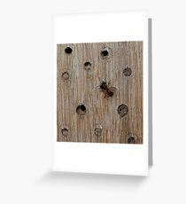 Solitary Bee Greeting Card