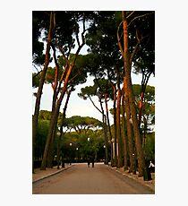 The Trees Photographic Print