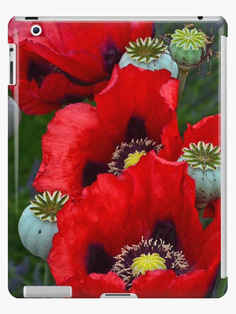 Red poppy flowers by perlphoto