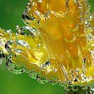 Blown Glass Daffodil by Gina Ruttle  (Whalegeek)