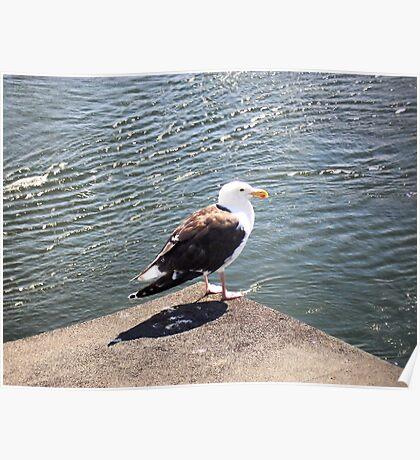 Messy Bird Poster