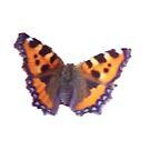 Butterflies photo By Miss K  L Slomczynski KABFA Designs by KABFA