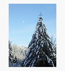 MORNING LIGHT ON SNOW COVERED TREE  Photographic Print