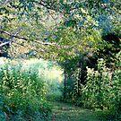 Luminous Threshold 5847  by Candy Paull