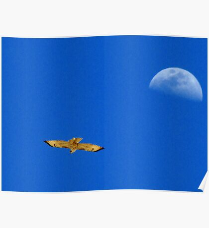 Red-tailed Hawk ~ Flight of the moon Poster