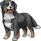 Bernese Mountain Dog by Jennifer Stolzer