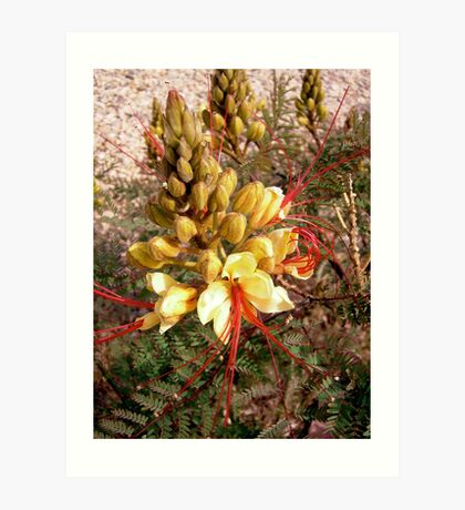 Yellow and Red flower Art Print