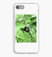 egg plant 1 iPhone Case/Skin