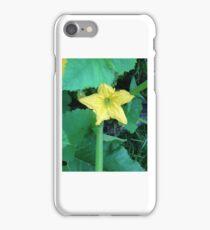 squash flower iPhone Case/Skin