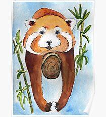 Roter Panda auf Baum Poster