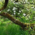 New life in the old abandoned orchard!   by Elaine Bawden