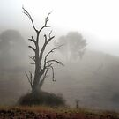 Early Morning Magic - Turondale Turnoff NSW by Bev Woodman