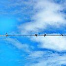Dickie Birds by NomadicGoddess