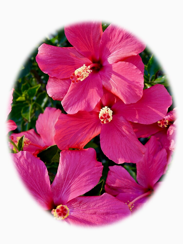Hibiscus Flowers by douglasewelch