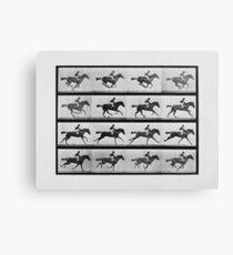 Animal Locomotion - 16 Frames Of Racehorse Annie G.  Canvas Print