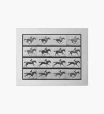 Animal Locomotion - 16 Frames Of Racehorse Annie G.  Art Board