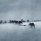 Spring Fog Paints The Farm by Wayne King