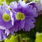 Purple pleasure. by Steve plowman
