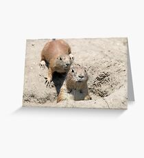 two prairie dogs watching from hole Greeting Card