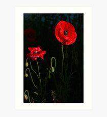 Red poppy 1 Art Print