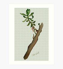 Twig Study Art Print