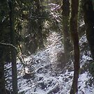 Forest Sun Rays in the Snow #24 by Dawna Morton