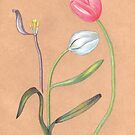 spring botanical tulips by EllenLambrichts
