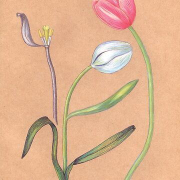 spring botanical tulips by EllenLambrichts