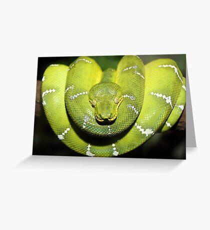 Emerald Boa in Wait Greeting Card