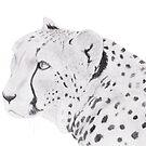 Cheetah by Linda Ursin