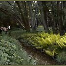Spirit Pony on a Langdon Woods Fernpath by Wayne King