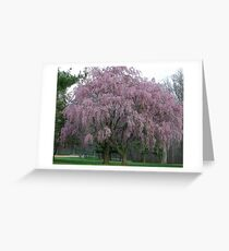 The Weeping Cherry Tree Greeting Card