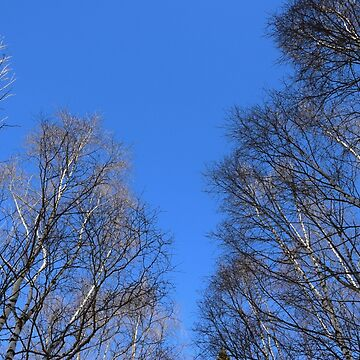 Trees against a blue sky by svehex