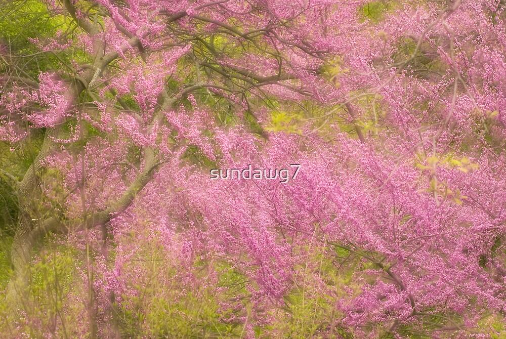 Redbud Harmony by sundawg7