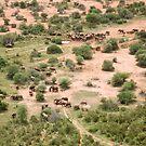 Elephants galore! by David Clarke