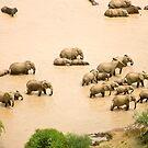 Elephants at a waterhole by David Clarke