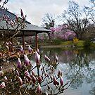 Japanese Garden - Hasselt, Belgium 2 by Alison Cornford-Matheson