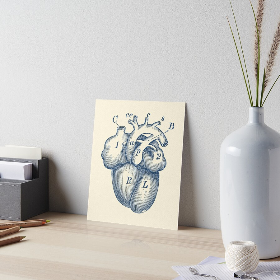 Láminas de exposición «Diagrama simple del corazón humano» de ...