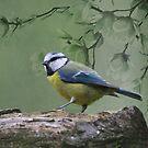 Blue Tit Bird by David Dehner