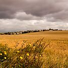 Fields at Westwood by Geoff Carpenter