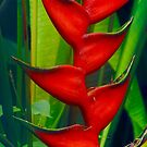 Heliconia Leaf by Barbara  Brown