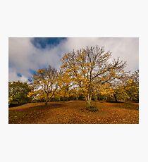 Autumnal Ash Photographic Print