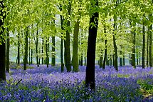 Dockey Wood 1 by Geoff Spivey