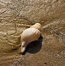 Seashell. by Nigel Bangert
