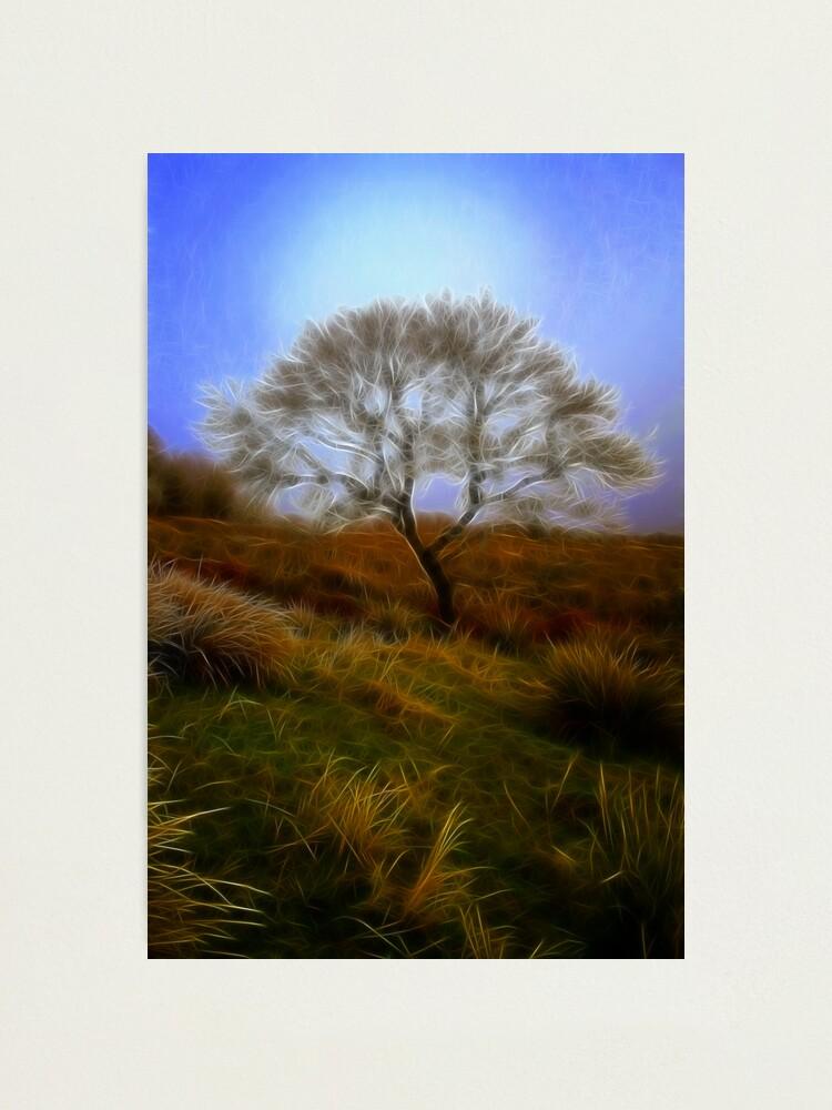 Alternate view of Tree  du  Fractalius Photographic Print