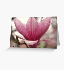 Translucent Magnolia Blossom Greeting Card