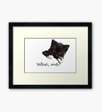 Who me? kitten Framed Print