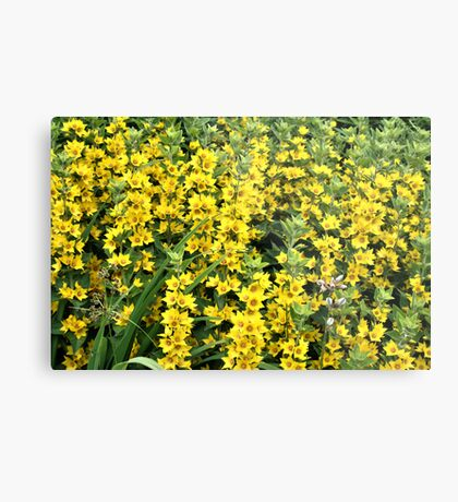 Nice Yellow Flower In Field Metal Print