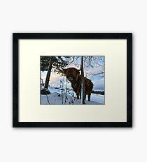 Scottish Highland Cattle Cow 1620 Framed Print