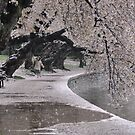 Fall of the Cherry Blossoms by Matsumoto